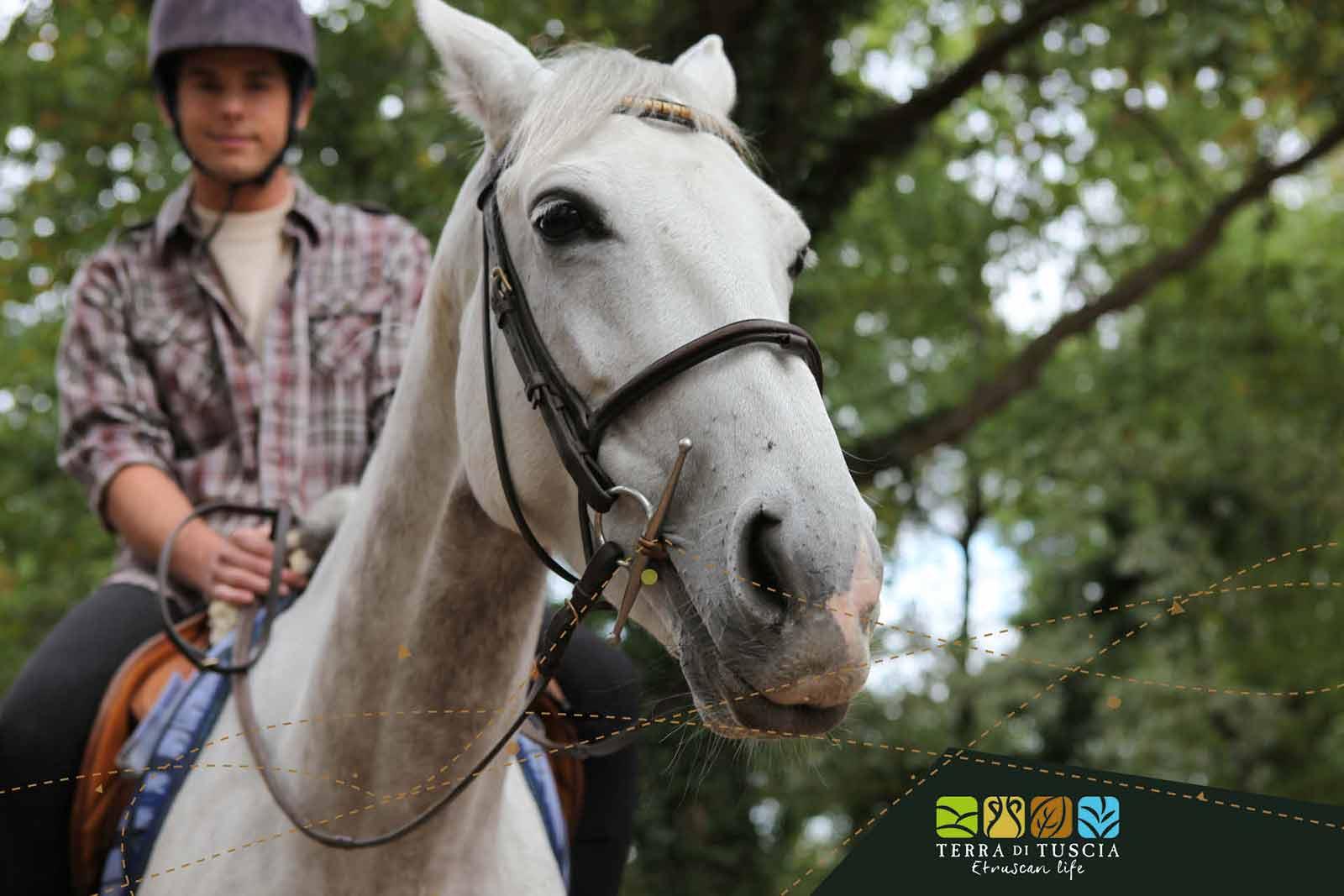 equitazione nella Tuscia
