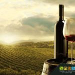 The best wines from Tuscia