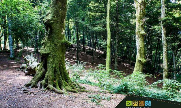 La Faggeta di Soriano nel Cimino: foresta vetusta, relax contemporaneo