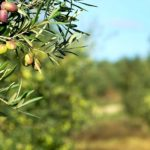 The green gold of Tuscia